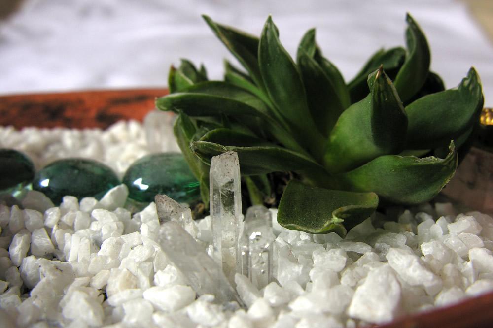 Esta es una suculenta que tengo hace algún tiempo y que se ha favorecido de tener alrededor cuarzos  cristal.