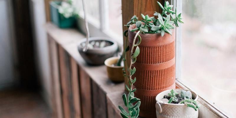 limpiar con plantas